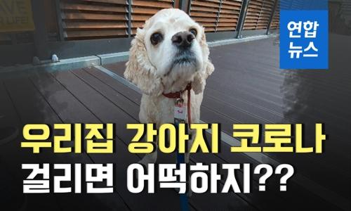 """[이슈 컷] """"우리집 강아지 코로나 걸리면 어떡하지?"""""""