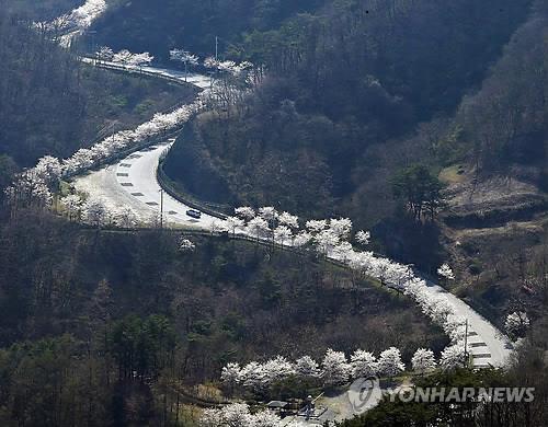 [임실소식] 옥정호 벚꽃축제·의견문화..