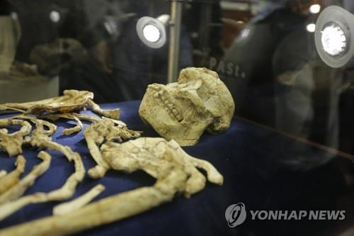 인류 조상 일부 약 200만년 전까지도 나무 타