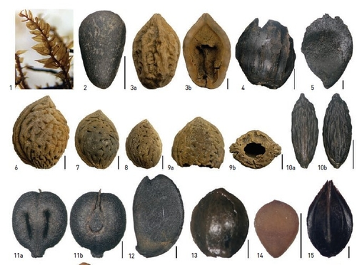 고려시대 폐허 된 동궁과 월지…우물 씨앗 분석에서도 확인됐다