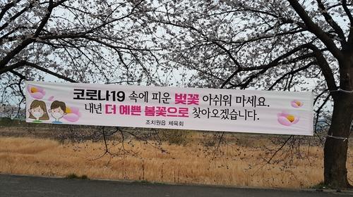 세종시 코로나19 여파 조치원 봄꽃축..
