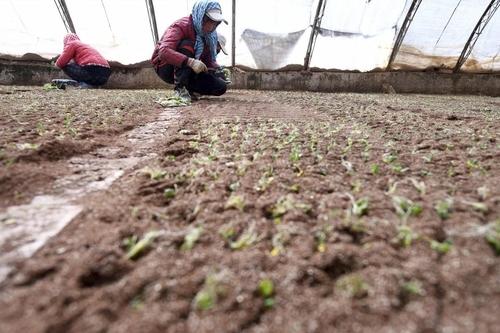 """中 농업전문가 """"코로나19는 정책전환 기회""""…식량안보론 제기"""