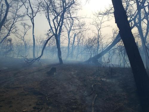 인천 축곶산에 화재…산림당국 진화 나서
