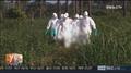 韩国拟11月向埃博拉疫区派遣第一批医务人员