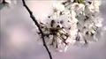 올해 벚꽃 일찍 핀다…서울 4월 6일 개화