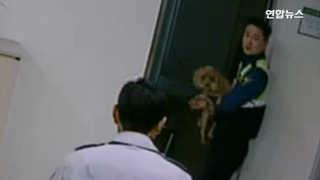 [현장영상] 도로 질주한 강아지 3km 추격 끝에 구출