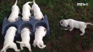 [현장영상] 세상에서 가장 행복한 순간…일곱 강아지들 뭘 하길래