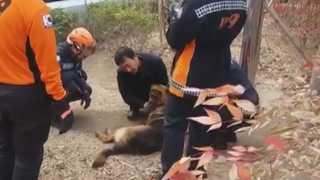 셰퍼드 집단 탈출…도심 공원서 소형견 3마리 물어 죽여