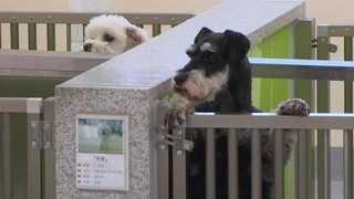 버려지는 반려동물들…입양시 진료비 등 지원