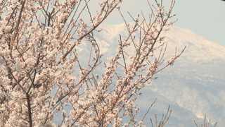벚꽃도 개나리도 활짝…봄꽃 물결 일렁이는 제주