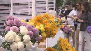 꽃으로 물든 신촌 연세로…국제 꽃시장으로 변신