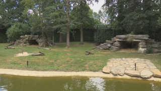 벨기에 동물원서 두 살된  암사자 우리 탈출…3시간만에 사살돼
