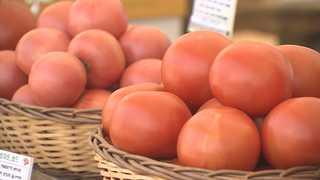 빨간 토마토를 온몸으로…퇴촌 토마토축제