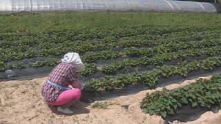 때 이른 무더위…고령 농업인 온열질환 위험