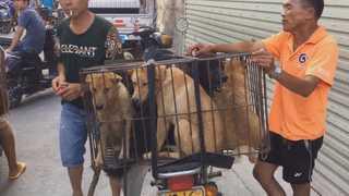 중국 위린 시 '개고기 축제' 열려…반대 운동도 거세