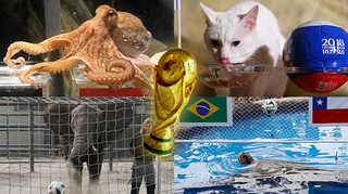 [포토무비] '월드컵 우승팀은 어디?'…세계 점쟁이 동물들의 계보