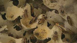 미래식량자원 곤충…사육농가 7년새 15배 '쑥'