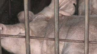 폭염에 가축 79만 마리 폐사…다음달까지 피해예상