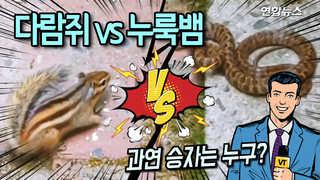 [현장] 다람쥐 이겨라! 누룩뱀 이겨라!