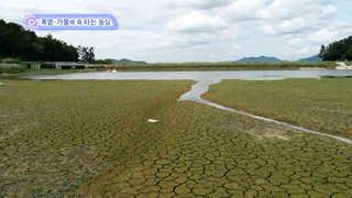 [클릭! 베스트 컷] 폭염·가뭄에 속 타는 농심 外