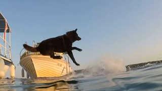 [영상] '개헤엄의 진수를 보여주마'…반려견과 함께하는 수영대회