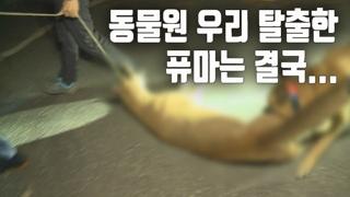 [자막뉴스] 대전동물원 탈출한 퓨마…4시간 반 만에 사살