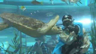 수족관에 한복입은 잠수부가…해양박물관서 이색추석