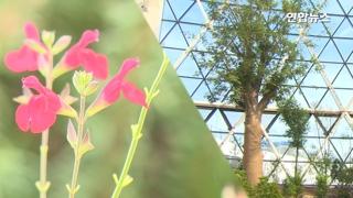[영상] 식물 3천100여종…11일 문여는 서울식물원 가봤습니다