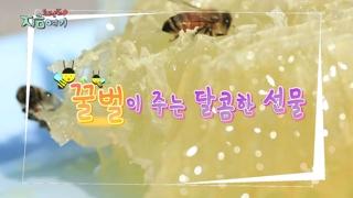 [트렌드 지금 여기] 꿀벌이 주는 달콤한 선물
