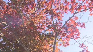 깊어가는 가을…설악산ㆍ오대산 단풍 절정