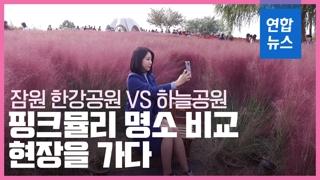 [영상] 핑크뮬리 인생샷 어디서 찍을까? 잠원 한강공원 vs 하늘공원