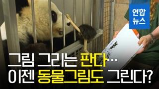 [영상] 그림 그리는 판다 '양양', 동물 추상화까지 가능?!