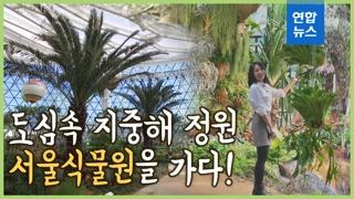 [영상] 도심 속 지중해 정원…서울식물원 관람 포인트는?