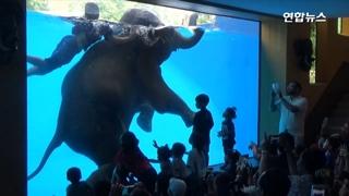 [영상] 물속에서 머리 찧고 묘기 부리는 코끼리들…'동물학대' 논란