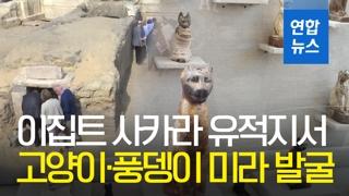 [영상] 이집트 고대 무덤서 고양이·풍뎅이 미라 발굴
