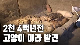 [자막뉴스] 이집트 무덤서 고양이 미라 발굴