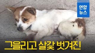 [영상] '네 다리가 까맣게 그을리고 살갗 벗겨진' 강아지 신고