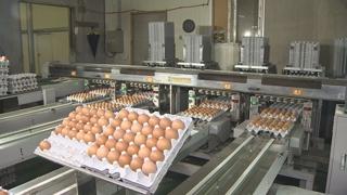 닭ㆍ오리ㆍ계란도 이력관리…20일 시범사업 시작