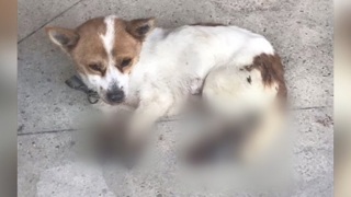 '네 다리에 화상' 강아지 발견…경찰 수사
