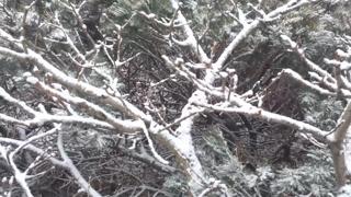 서울 첫눈 가능성…비ㆍ눈 그친 뒤 겨울 추위