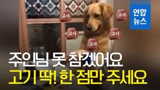 [영상] 주인님 고기 주세요~ 도저히 못 참겠어요!