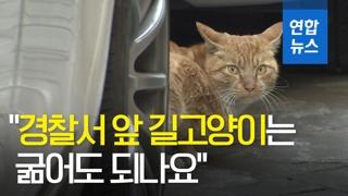 """[영상] """"경찰서 앞 길고양이는 굶어도 되나요""""…캣맘의 눈물"""