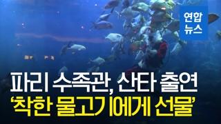 [영상] 파리 수족관에 나타난 산타…'착한 물고기에게 선물을'