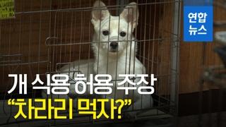 """[영상] """"차라리 먹자?""""…육견단체 '개식용 허용' 주장"""