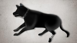 동물 학대 처벌 강화…죽이면 3년 이하 징역