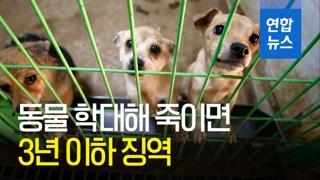 [영상] 동물 학대해 죽이면 3년 이하 징역…'애니멀 호더'도 처벌