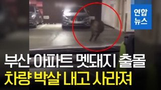 [영상] '달려라 달려'…아파트 주차장 활보하던 멧돼지, 결국?