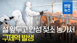 """[영상] """"구제역 확산 막아라""""…설 앞두고 구제역 비상"""