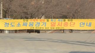 '구제역 여파' 정월 대보름 행사 줄줄이 취소
