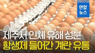 [영상] 제주 계란서 인체 유해 성분 '엔로플록사신' 검출